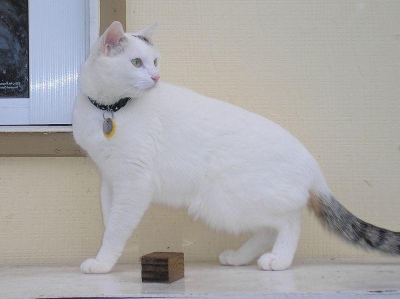 Tabby Tail aka Houdini